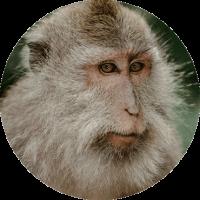 Jimmy The Monkey